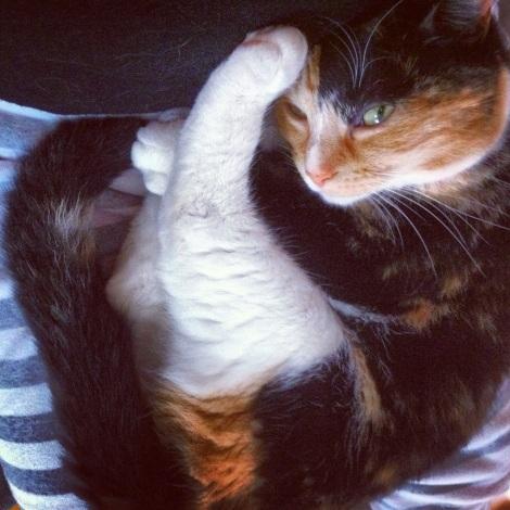 """...Sophie qui préfère """"chiller"""" sur moi."""