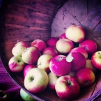 C'est le temps des pommes