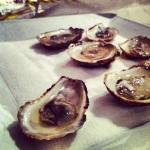 Huîtres sur plage de sel