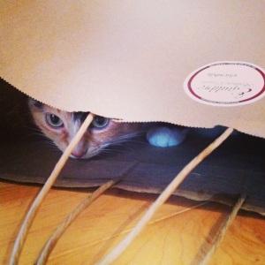 Sophie-la-chatte approuve le sac!