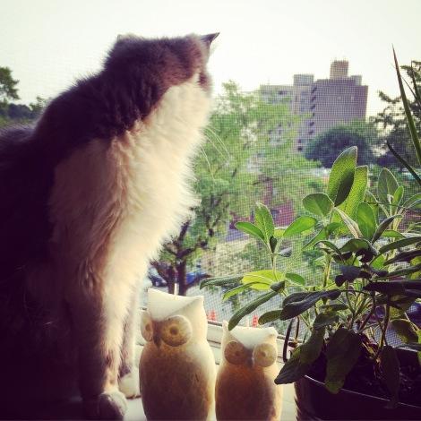 Le chat du soir: Maya!