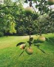 Le site est un paradis pour les passionnés d'horticulture